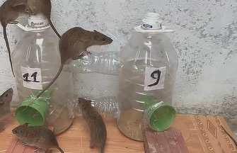 利用塑料瓶罐制作家庭捕鼠器