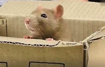 如何用冰棒棍制作寵物鼠房子