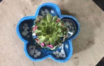 用衛生紙和水泥DIY一個漂亮的多肉花盆