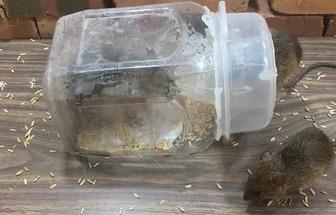 废瓶罐DIY自制捕鼠器