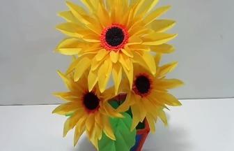 使用環保袋DIY矮化向日葵盆栽花