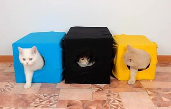 寵物達人教你舊衣改造貓窩
